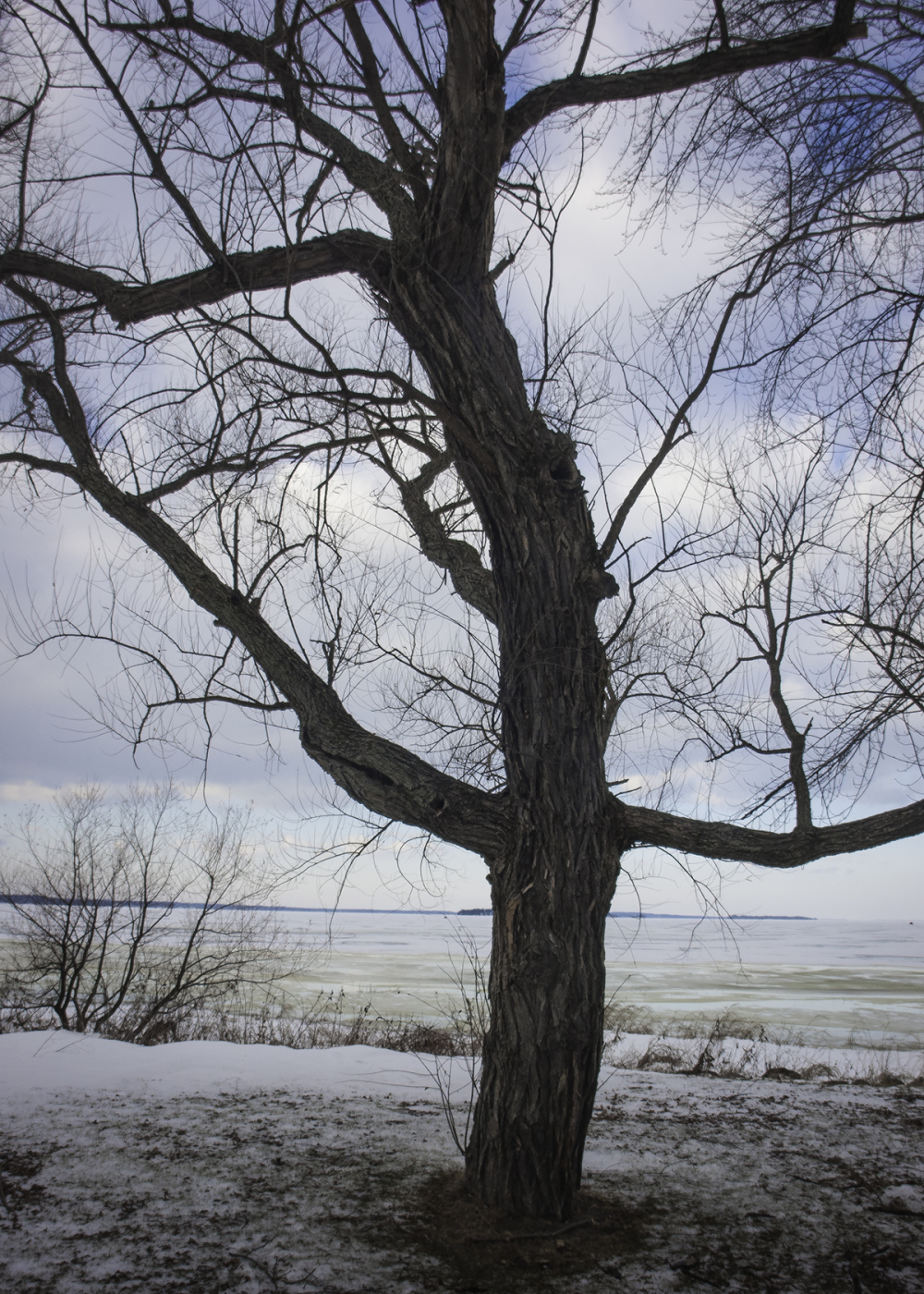 Shimmying Tree