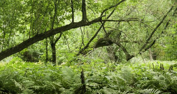 Woods at Dusk