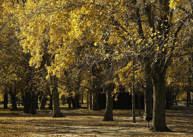 Later Autumn