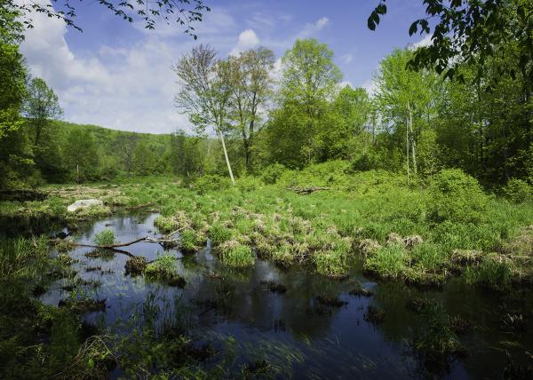 Bristol Marsh