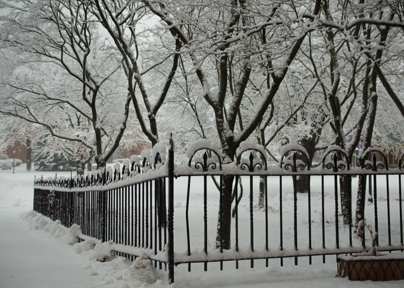 Early Morning Snow