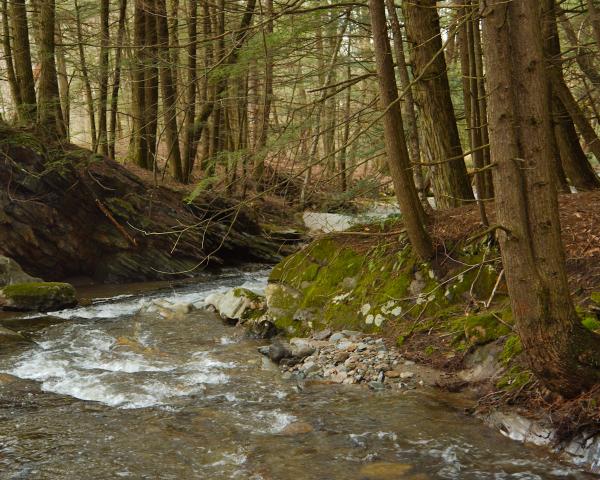 Vemont Brook