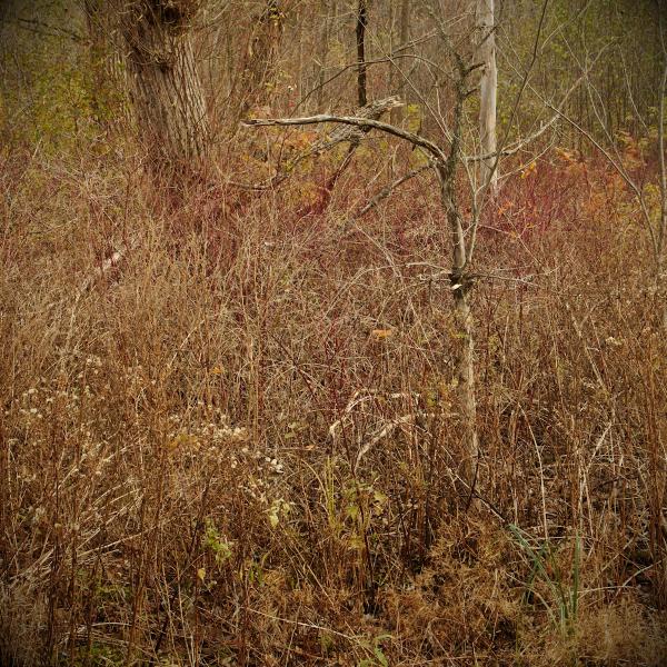 Vermont in Stick Season