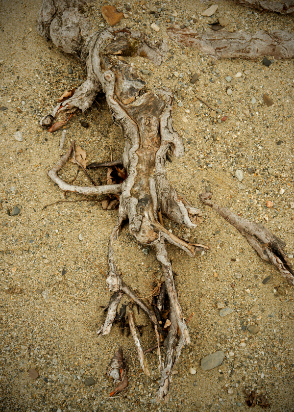 Abstract Root