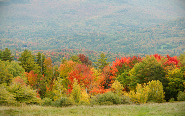 Fall Folliage in Vermont