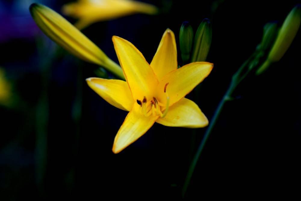 Yellow Energy