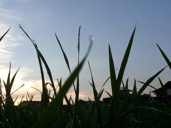 rice field scenery after rain