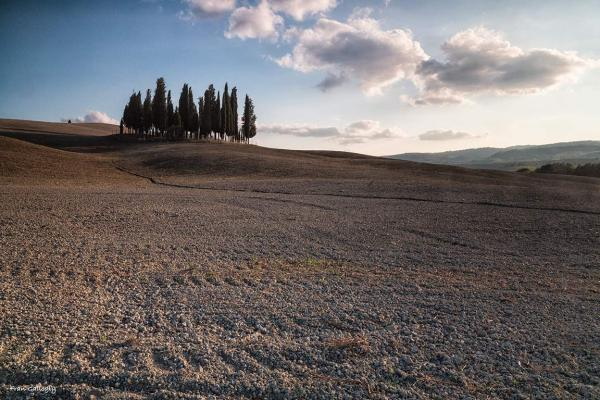Cypress in San Quirico d'Orcia, Tuscany