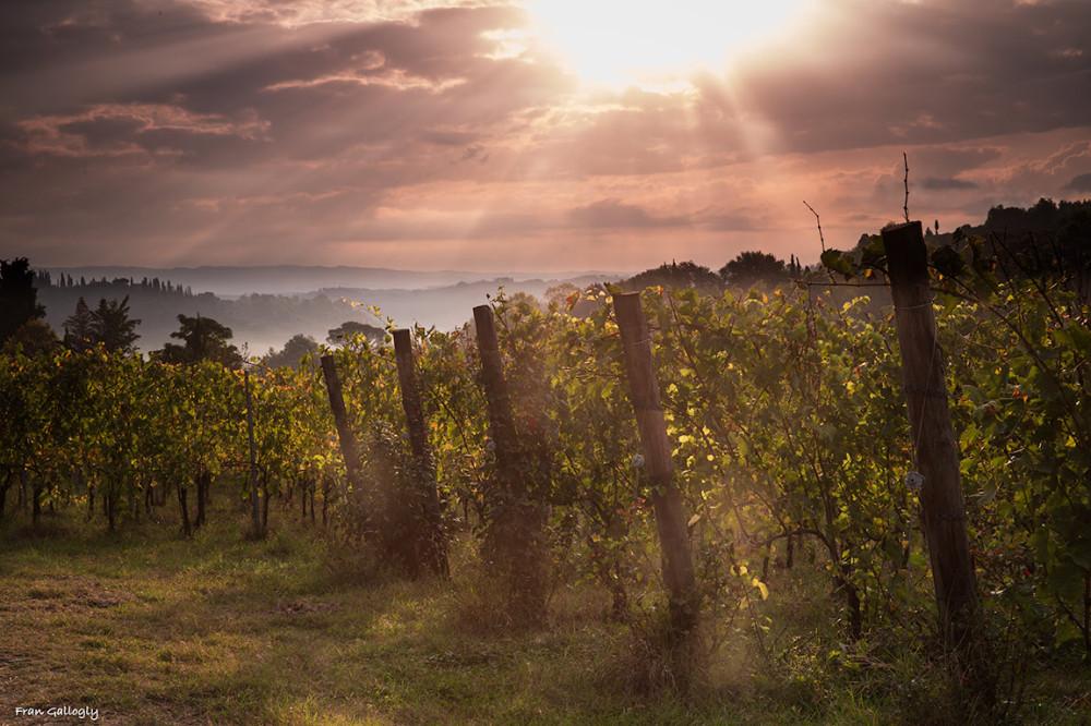 Dawn at the Vineyards, tuscany