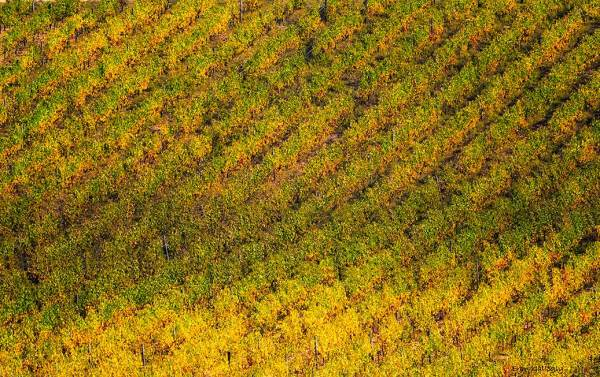 Vineyard Abstraction