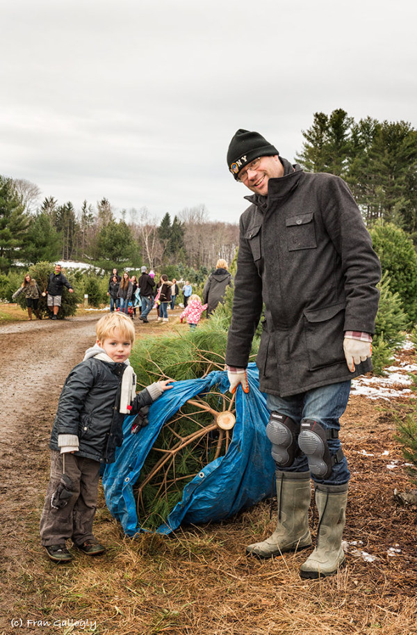Father and son at Christmas tree farm cutting tree