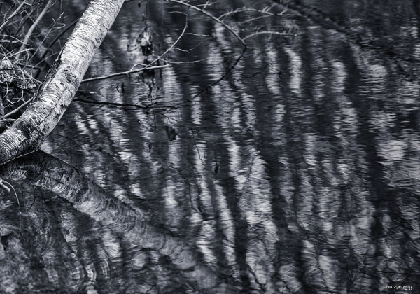 Birch Abstraction