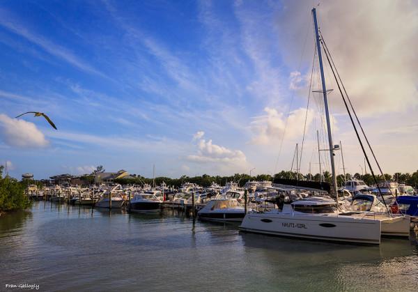 Marina at Virginia Key
