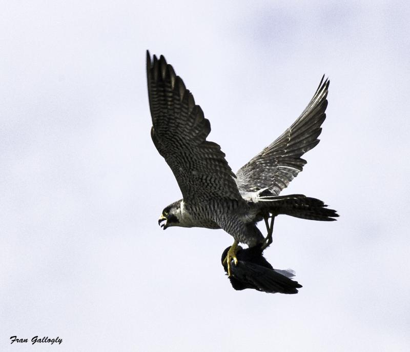 Winged Terror