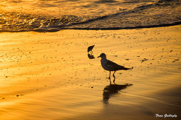 Birds on the Shore at Sunrise