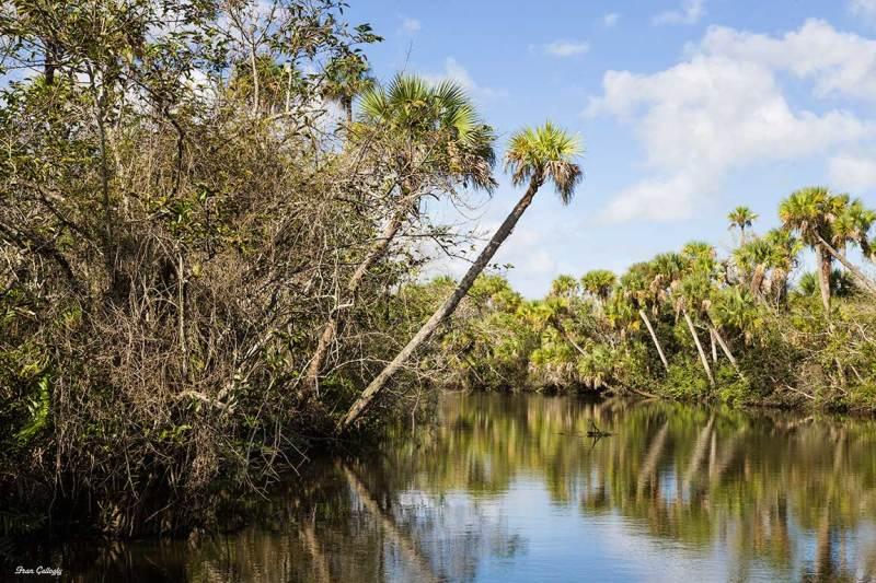 Florida Amazon