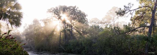 Jungle Light