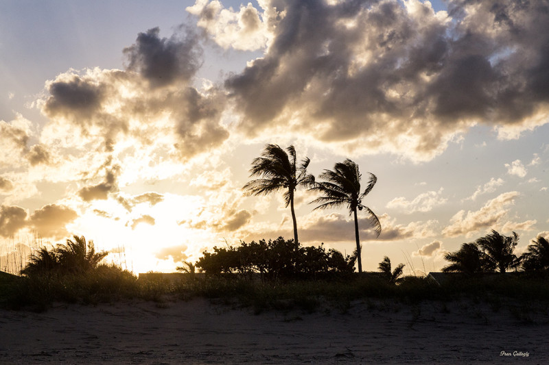 Wind at Sunset