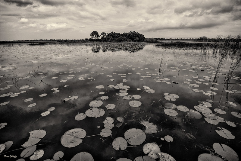 All the Lily Pads!