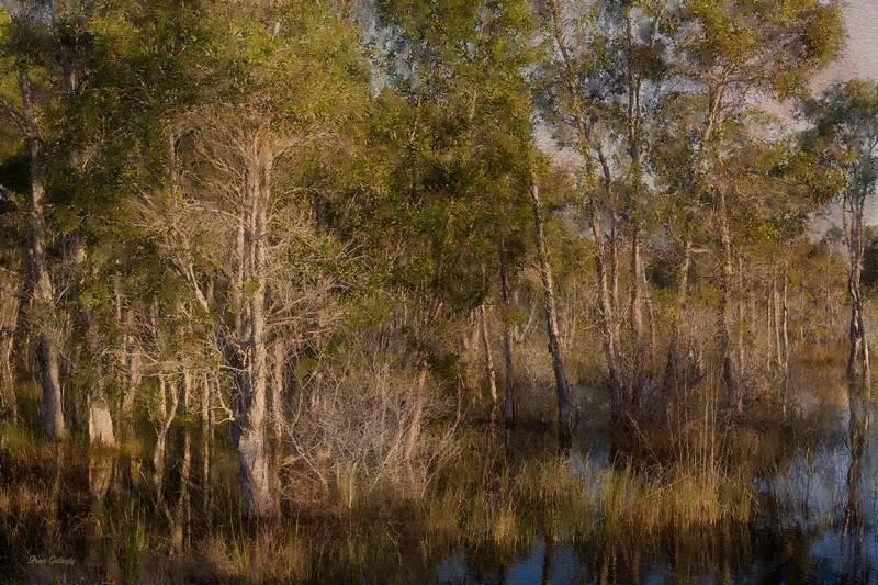 Florida Savannah