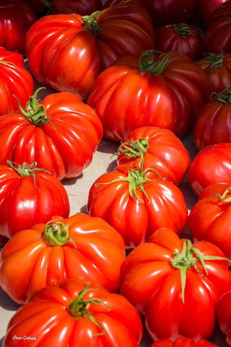 Yummy Tomatoes
