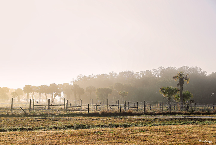 fog at sunrise at adams ranch in okeechobee florid
