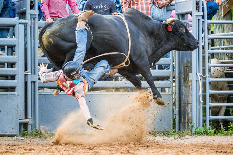 Bullriding in Fellsmere Rodeo, Florida