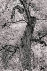 Tree at the NY Botanical Garden in New York City