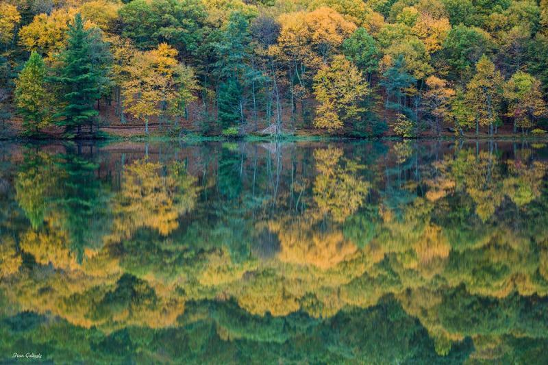 Abbott Lake Reflections Blue Ridge Pkwy