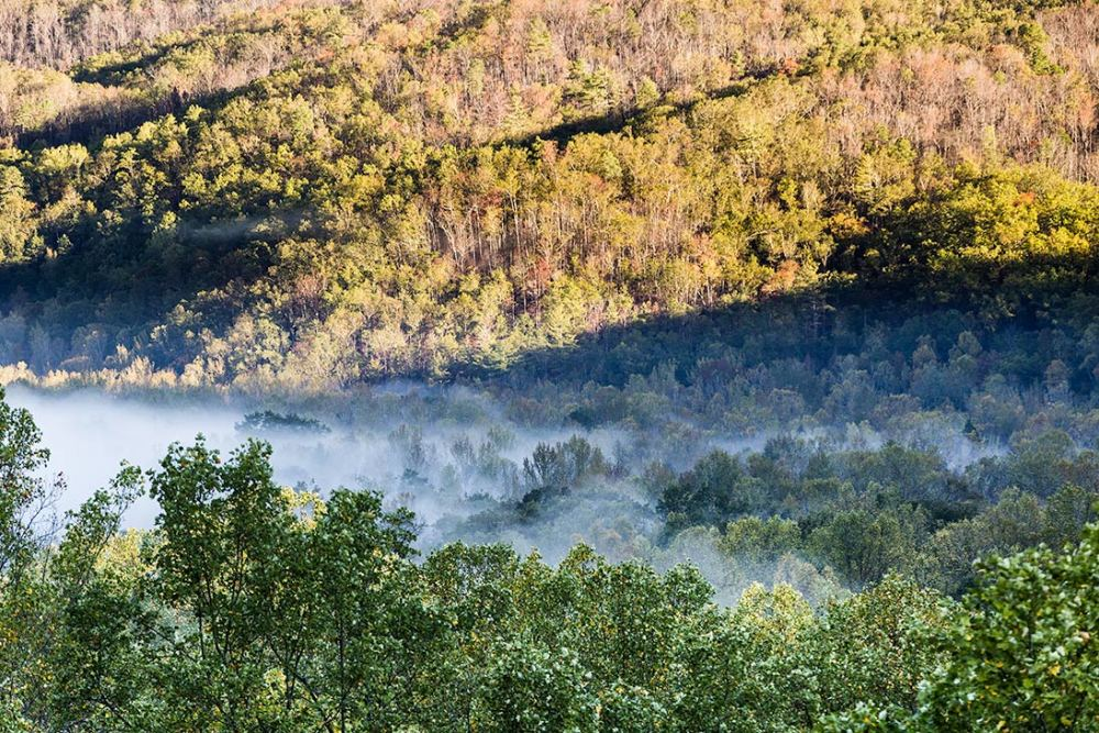 Trees in fog, Newfound Gap, Smokies