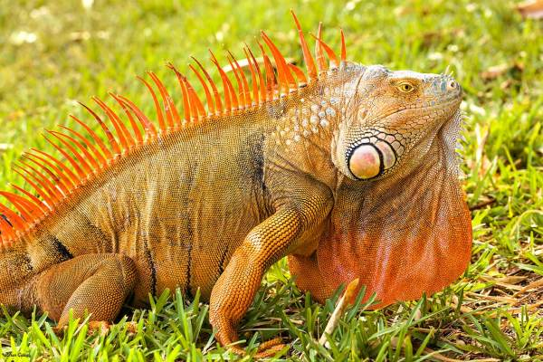 Red Iguana, Delray FL