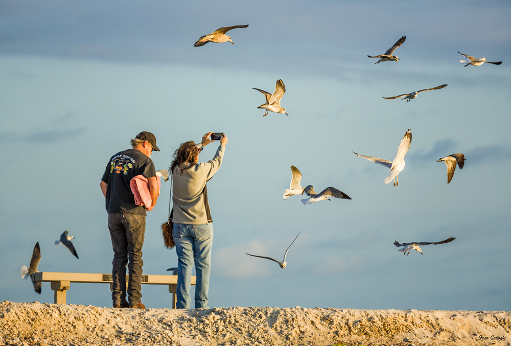 Couple taking photos of gulls in a feeding frenzy,