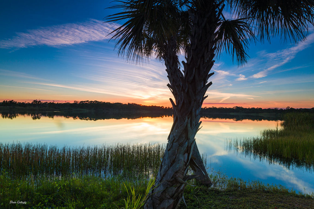 Palms and lake at night in Florida