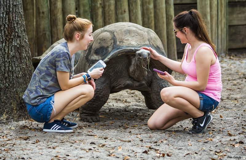 Aldabra tortoise at Lowry Park Zoo, Tampa FL