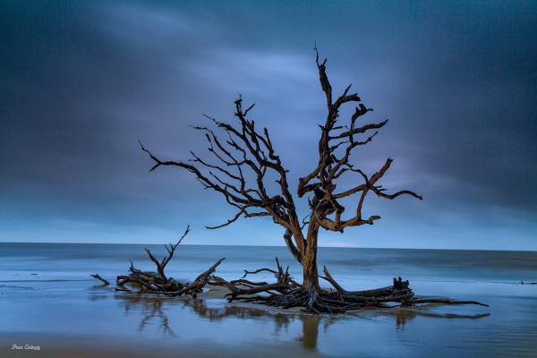 Dawn on Jekyll Island