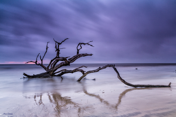 Driftwood on beach at dawn, Jekyll Island, GA