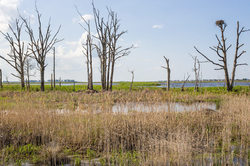 Osprey Nest, Prime Hook Wildlife Refuge, Lewes DE