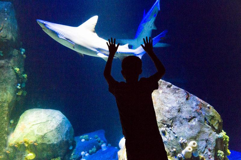 Sharks at New York Aquarium, Coney Island, Brookly