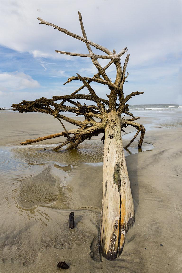 Driftwood on the beach, Hunting Island, SC