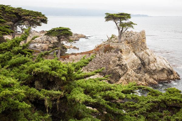 Lone Cypress, Monterey CA