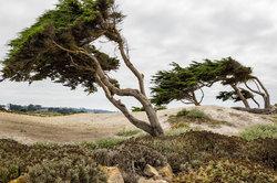 Cypress on 17 mile drive, monterey, california