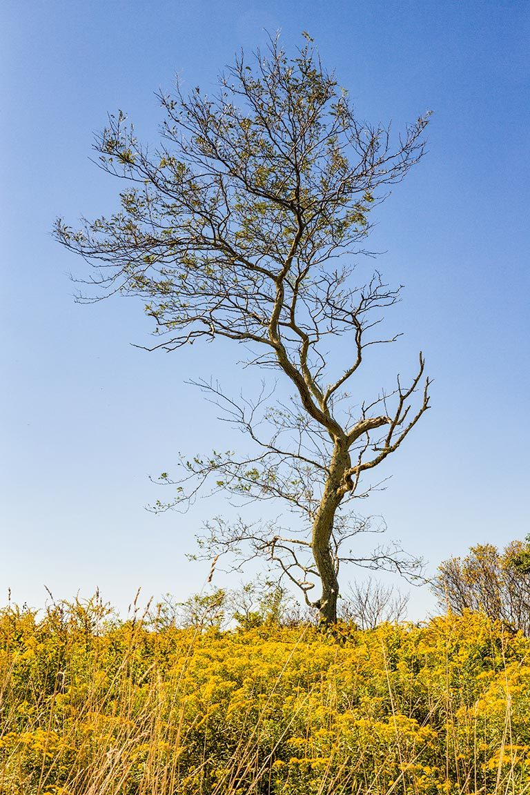 Hodge Preserve Tree with Goldenrod