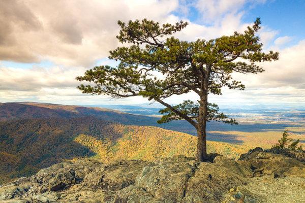 raven's roost overlook on blue ridge parkway, virg