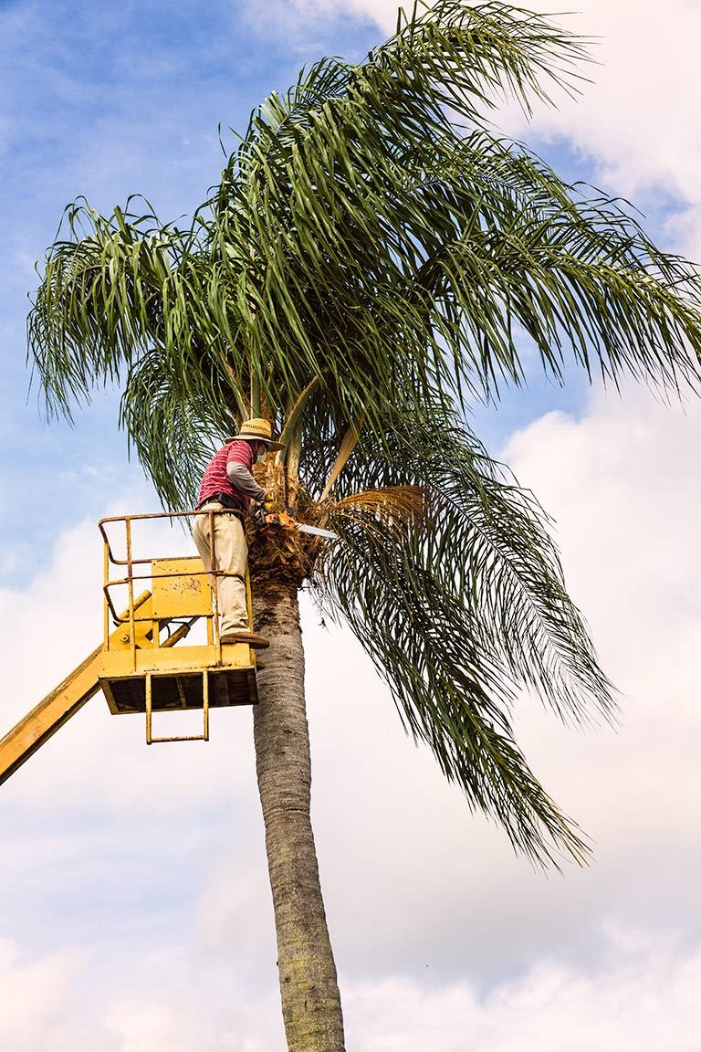 Pruning Palm Trees