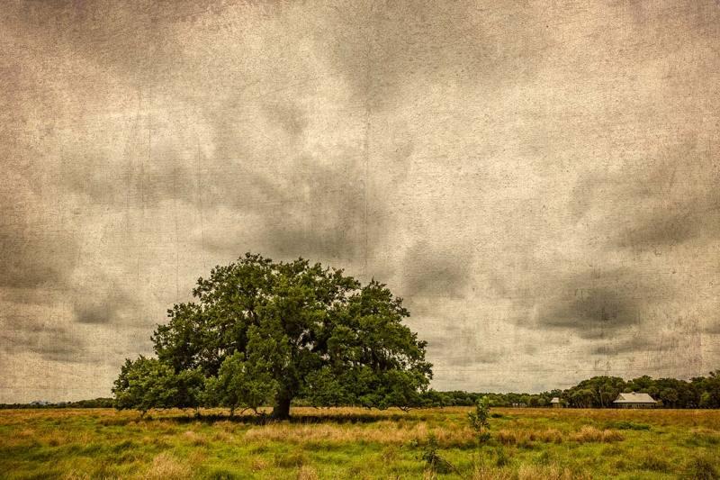 tree,florida,okeechobee,ranch