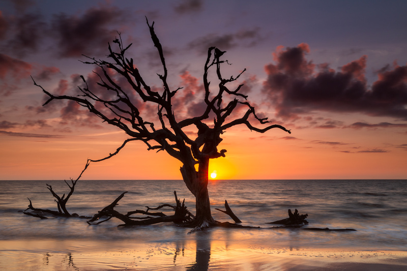 Driftwood tree at sunrise, GA