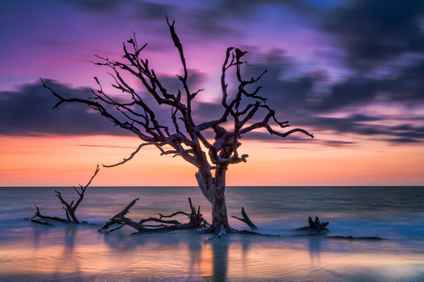 Driftwood tree at sunrise, GAT