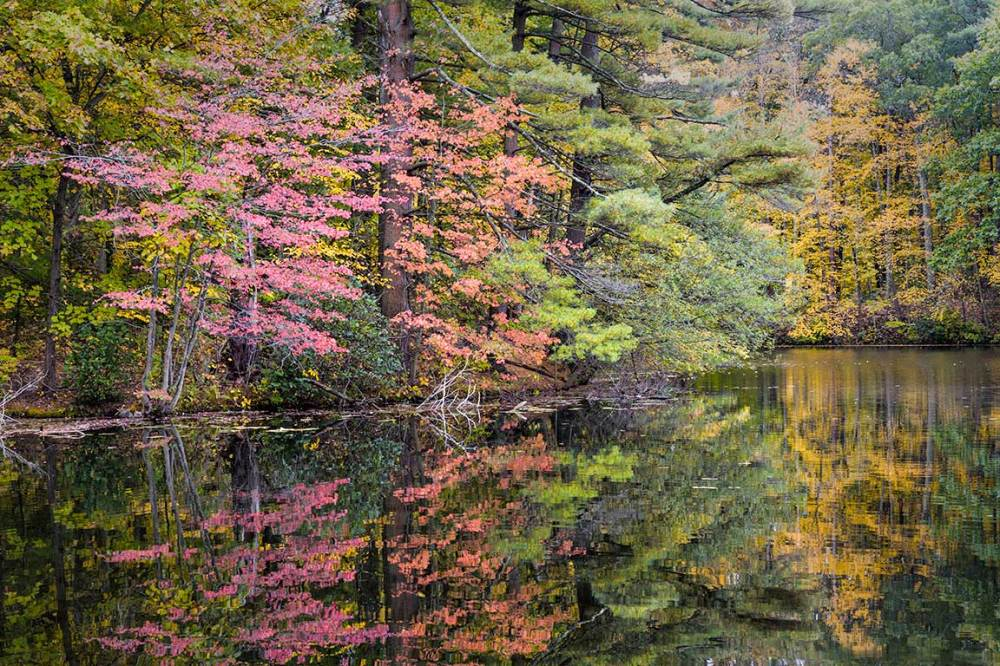 fall foliage at Supply Ponds, Branford CT