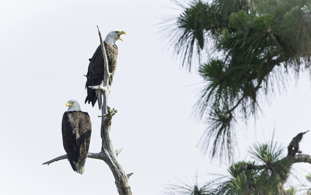 two eagles, florida