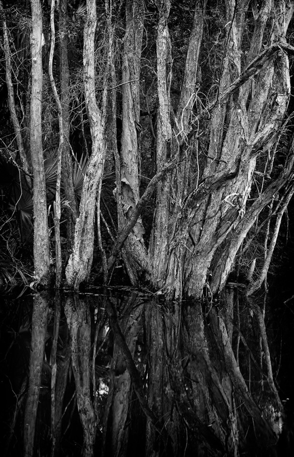 trees in a Florida canal